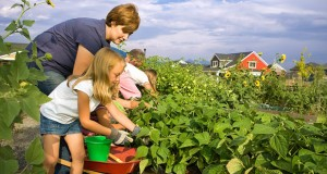 Be careful planting near or over your drainfield