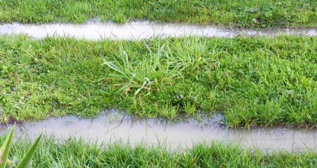 Water sitting over lateral lines of drainfield